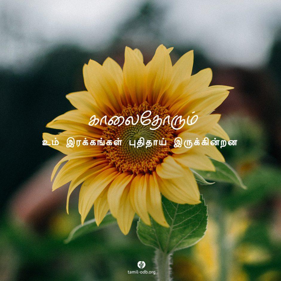 Share Tamil ODB 2021-08-30