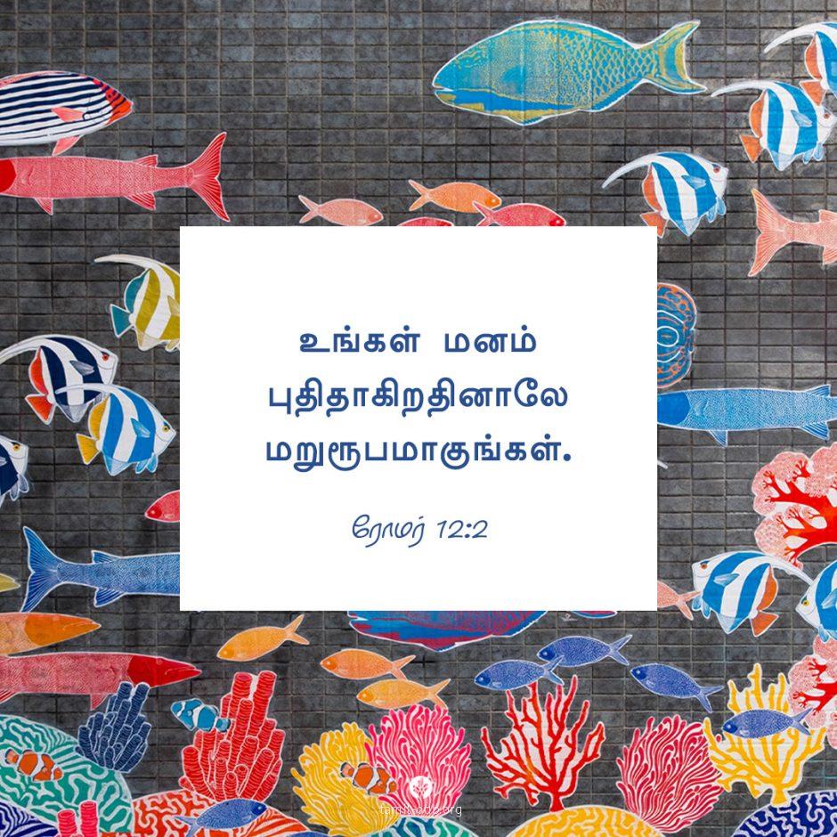 Share Tamil ODB 2021-09-29